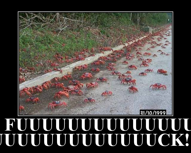 omgwtfcrabs!